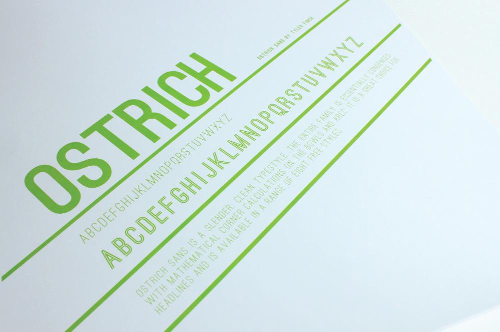 ostrich_003